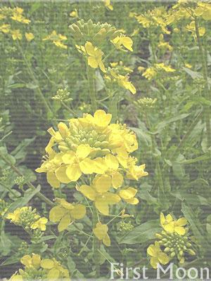 20080404.jpg